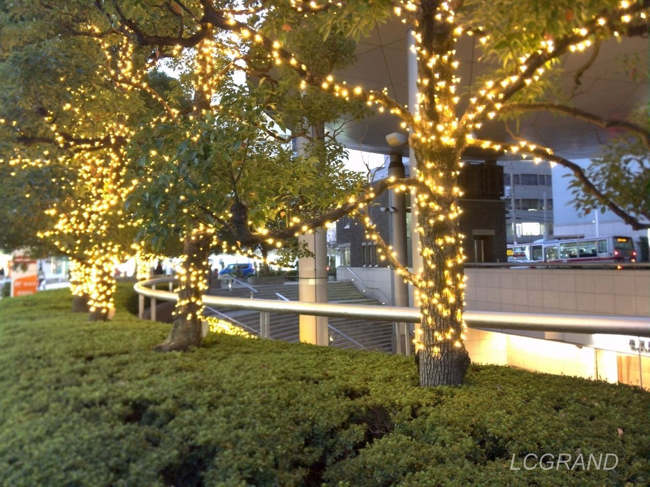 用賀駅の側道にある木々にもイルミネーションが飾られています。